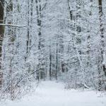 冬のダイエットにおすすめの食事と運動!筋トレは効果的?