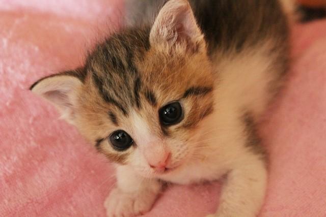 猫伸びポーズダイエットの効果は凄い?やり方や痩せた口コミ!